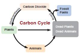 Figure 1 Carbon Cycle in the Atmosphere.